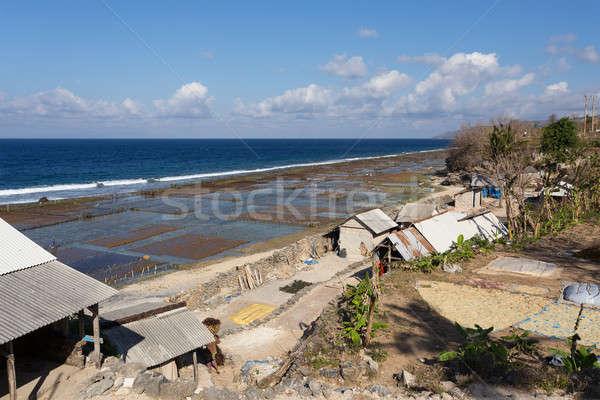 Zeewier strand bali hemel wolken voedsel Stockfoto © artush