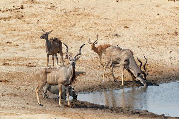 Iszik sáros park Botswana vadvilág fotózás Stock fotó © artush