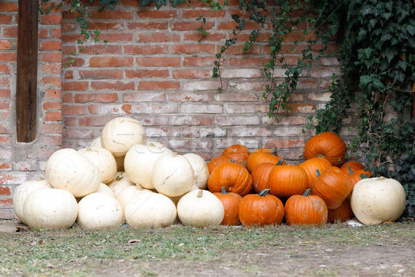 Jesienią ziemi murem trawy owoców Zdjęcia stock © artush