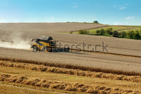 Stock photo: combine harvesting rape