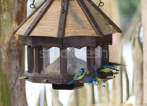 Pássaro teta casa inverno Foto stock © artush
