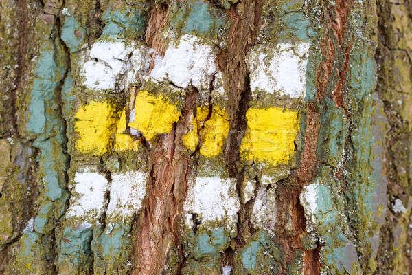 árvore casca textura assinar padrão fundo Foto stock © artush
