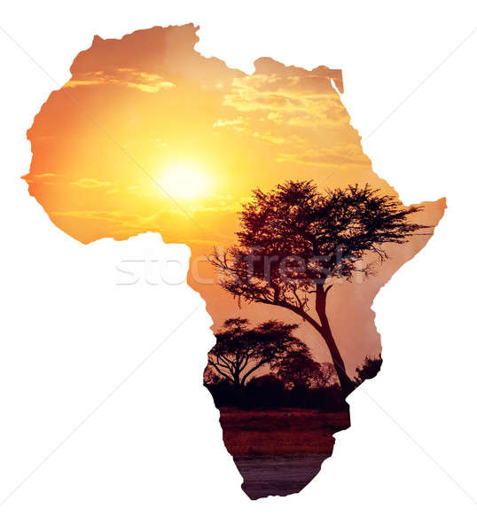 African sunset with acacia, Map of africa concept Stock photo © artush