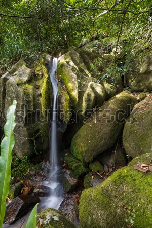 Small waterfall in Masoala national park, Madagascar Stock photo © artush