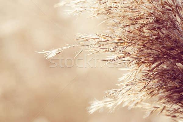 natural background Stock photo © artush