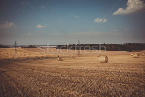 retro color of straw bales in harvested fields Stock photo © artush