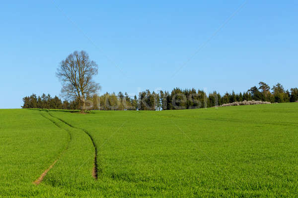 summer rural sping landscape Stock photo © artush