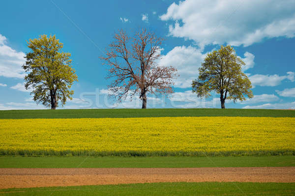 Stock photo: Beautiful summer rural landscape