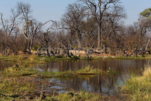 Joc rezerva peisaj frumos delta Botswana Imagine de stoc © artush