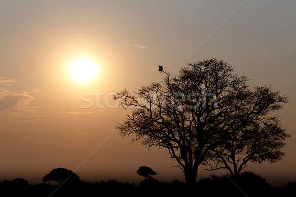 African sunset Stock photo © artush