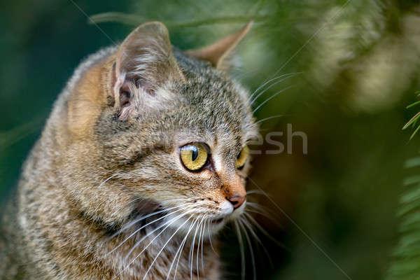 close up cat portrait  Stock photo © artush