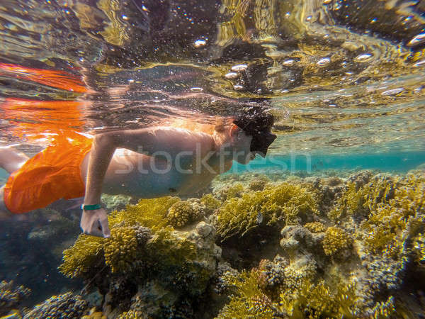 Young boy Snorkel swim in coral reef Stock photo © artush