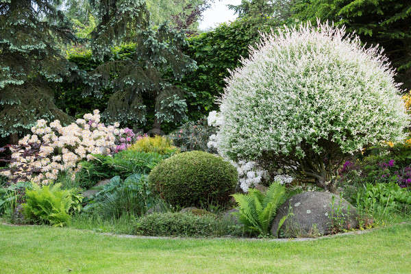 Beautiful spring garden design with rhododendron Stock photo © artush