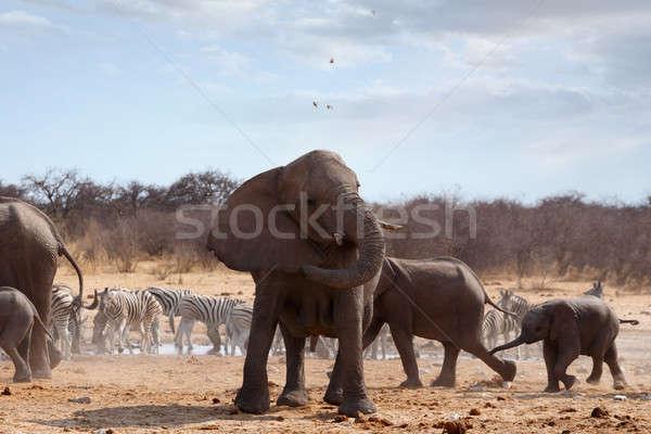 Angry Elephant in front of heard Stock photo © artush