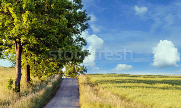 rural path with trees next to meadows Stock photo © artush