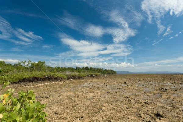 Сток-фото: дерево · север · Индонезия · широкий · Blue · Sky · пляж