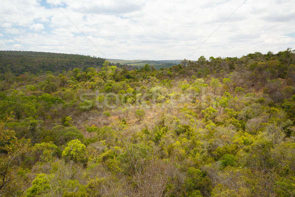 Rainforest in Ankarafantsika park, Madagascar Stock photo © artush