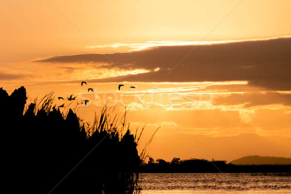 Birds silhouette and sunset over the river Stock photo © artush