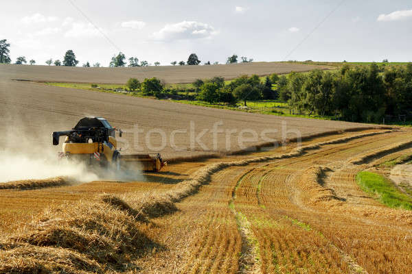 Yellov combine on field harvesting gold wheat Stock photo © artush