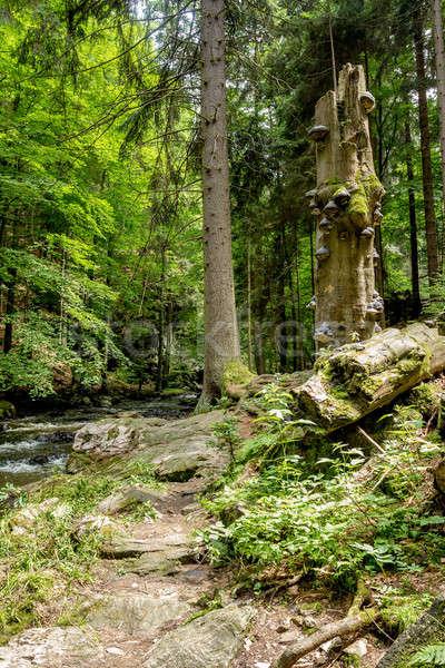 ストックフォト: 成長 · ツリー · キノコ · 成長 · 枯れ木 · 森林