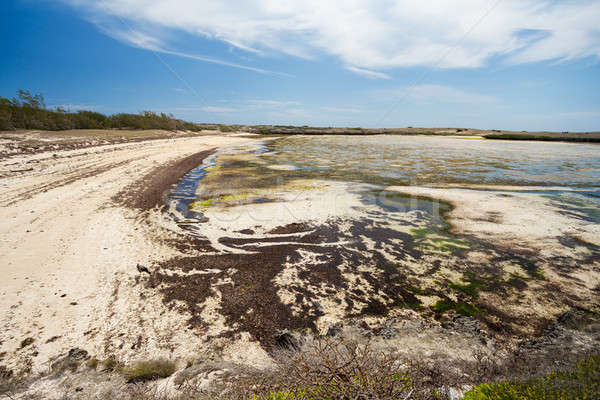 Raj piasku plaży Madagaskar niski fala Zdjęcia stock © artush
