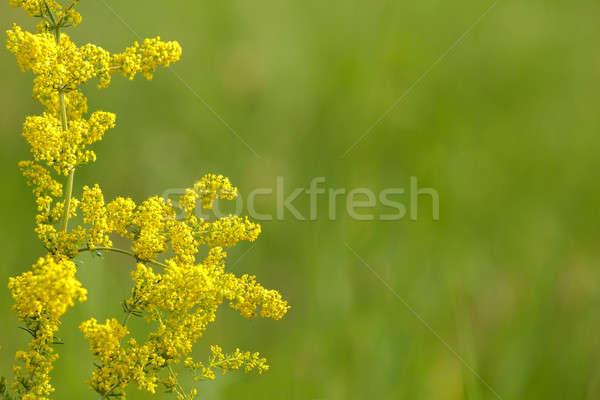 summer background Stock photo © artush