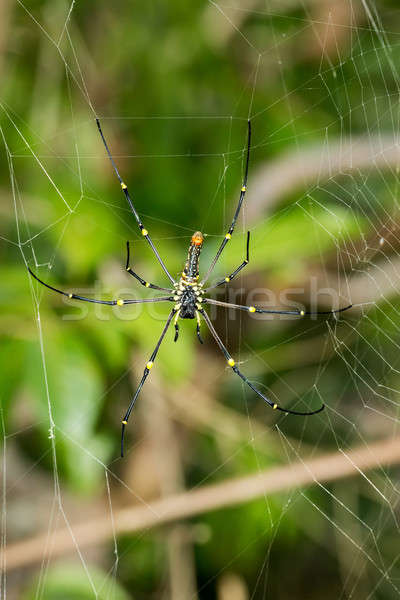 гигант паутину Бали Индонезия живая природа Сток-фото © artush
