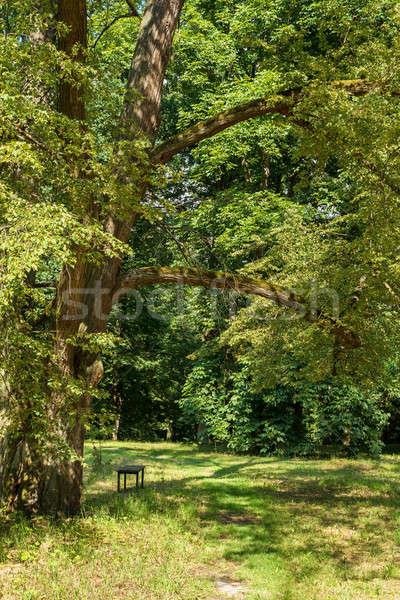 Panchina parco scena tranquilla albero erba natura Foto d'archivio © artush