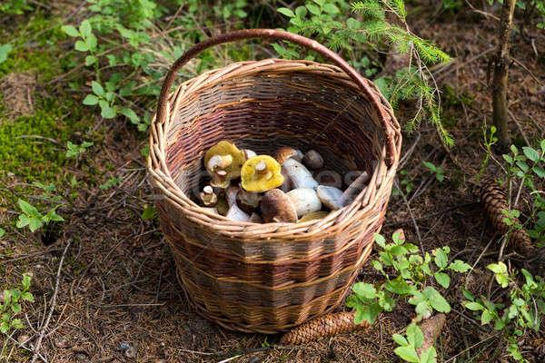 basket of fresh summer mushroom Stock photo © artush