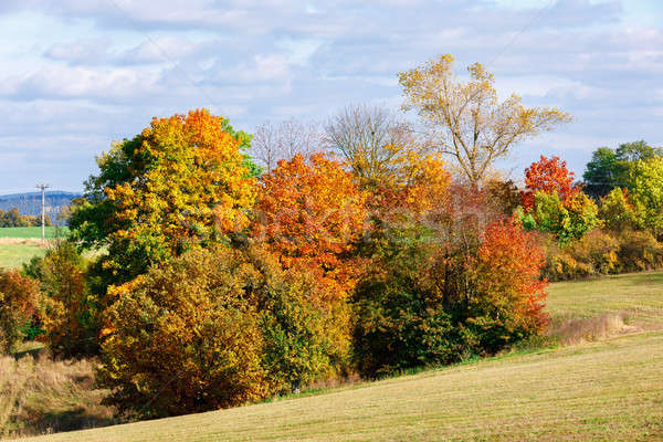 Autumn landscape with fall colored trees Stock photo © artush