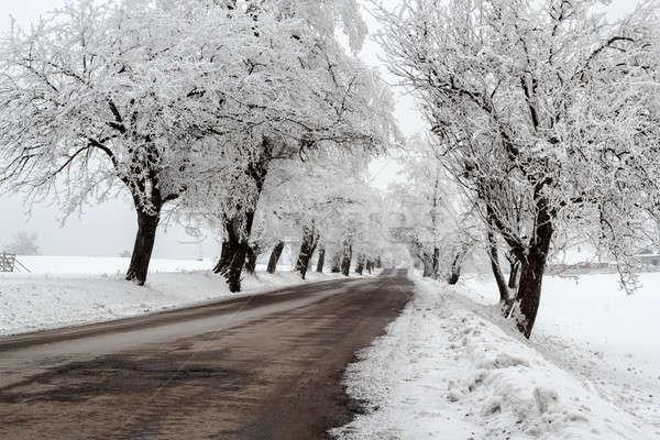 snowy trees in winter landscape Stock photo © artush