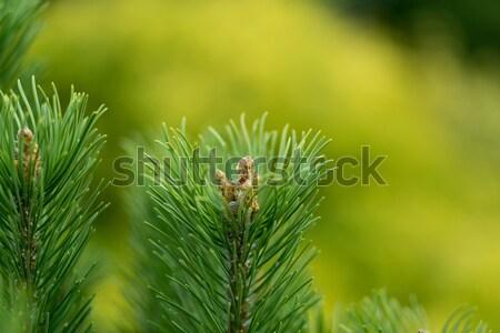 Sığ odak bahçe bahar bahçıvanlık ağaç Stok fotoğraf © artush