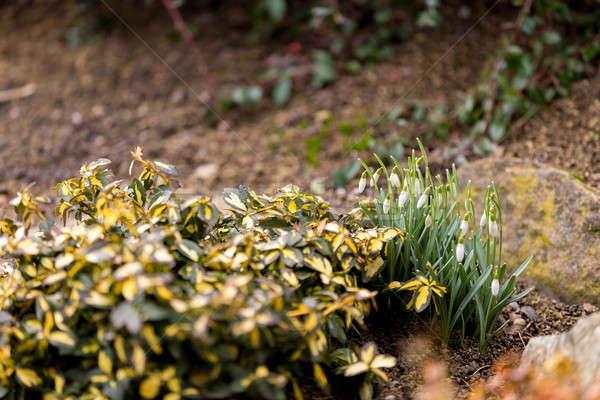 Virágzik tavasz kert sekély fókusz tavasz Stock fotó © artush