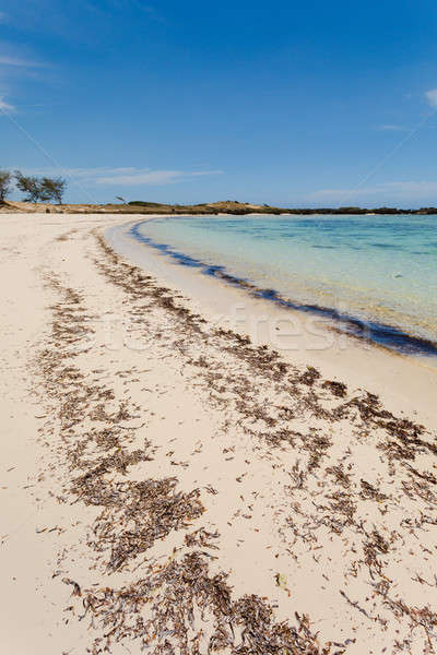 пляж Мадагаскар красивой индийской океана живописный Сток-фото © artush