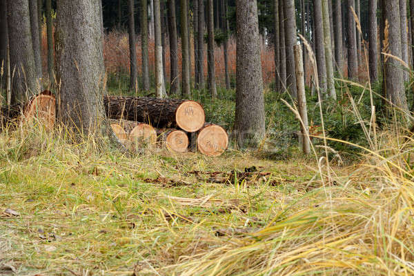 Pile of wood in forest grass Stock photo © artush