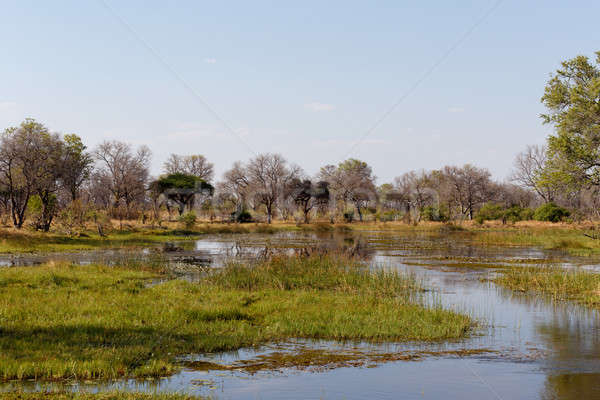 Manzara güzel su lilyum delta Botsvana Stok fotoğraf © artush