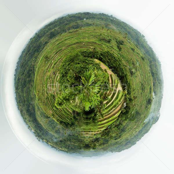 Stock fotó: Rizs · mezők · központi · Bali · Indonézia · panoráma