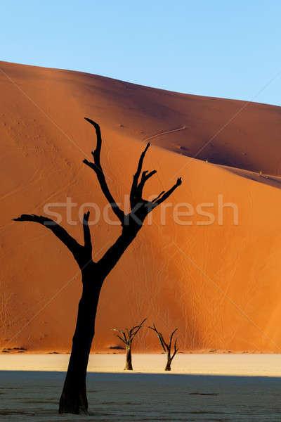 Dead acacia in Dead Vlei, Sossusvlei Namibia Africa Stock photo © artush