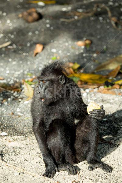 Portre Endonezya maymun maymun siyah park Stok fotoğraf © artush
