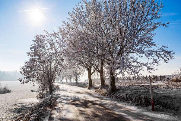 Tél út napos fagyos nap kék ég Stock fotó © artush
