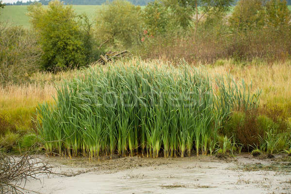 Gölet yeşil sonbahar tipik orman manzara Stok fotoğraf © artush
