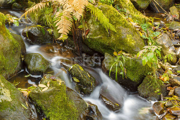 Falls on the small mountain river in a wood shooted in autumn Stock photo © artush