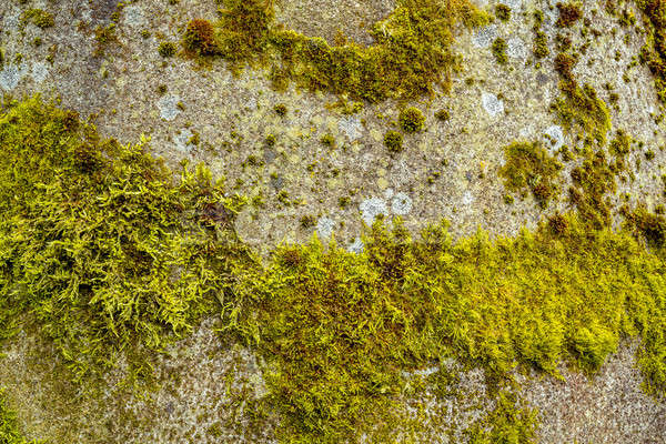 grunge autumn background  with green moss Stock photo © artush