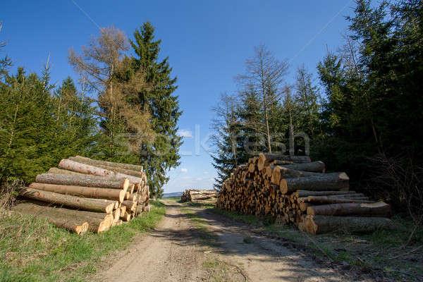 Hout bos weg klaar winter Stockfoto © artush