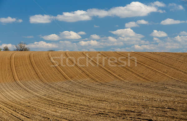 spring plowed field curves in countryside Stock photo © artush