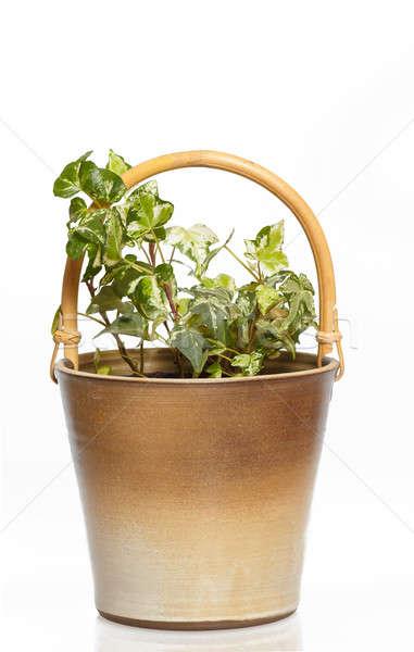 houseplants in flower pot Stock photo © artush