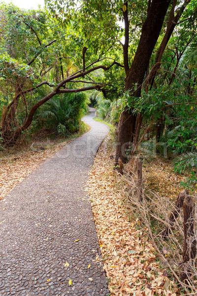 公園 ジンバブエ 春 ロマンチックな 風景 ストックフォト © artush