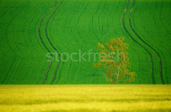 Beautiful summer rural landscape lines Stock photo © artush