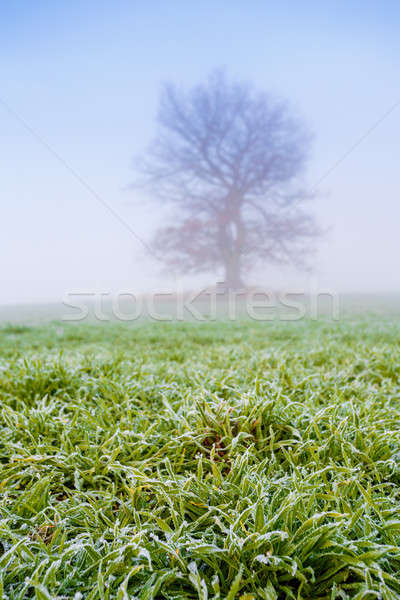 Froid misty matin arbre brouillard nature Photo stock © artush