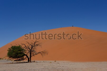 Dune 45 in sossusvlei NamibiaDune 45 in sossusvlei Namibia, view Stock photo © artush
